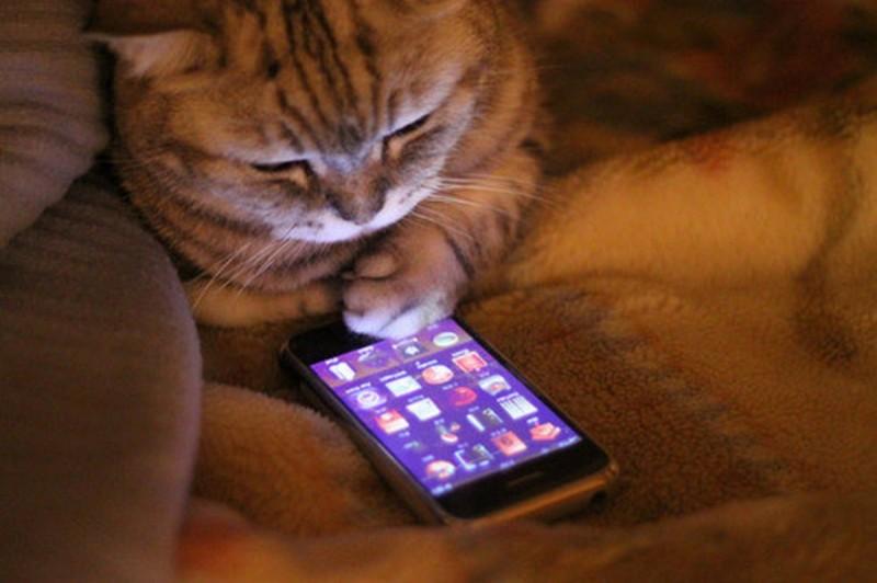 Кот и телефон